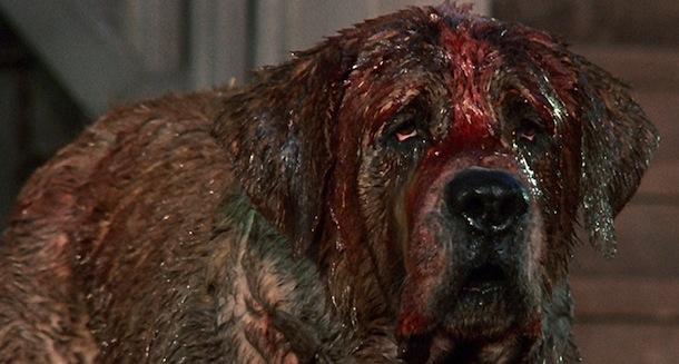 Movie About Rabid Dog