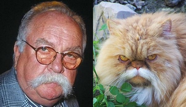 Look-alike-cat-and-their-owners